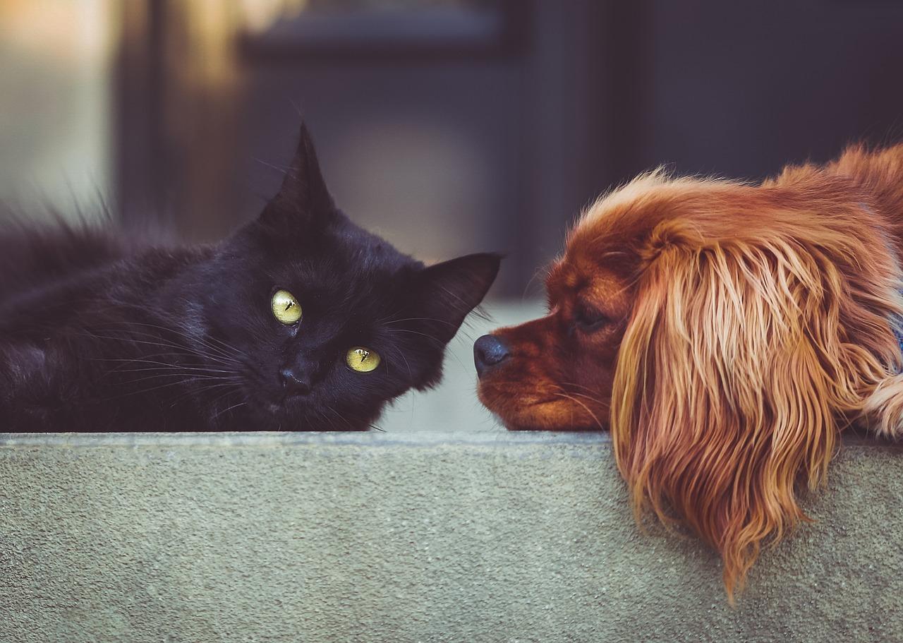 Fungerar katter och hundar