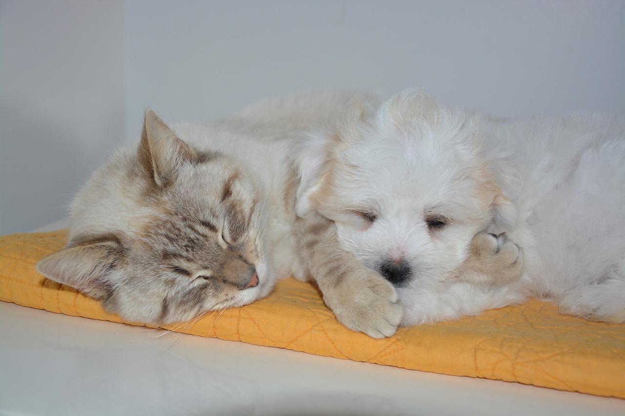 Kattens och hundens ursprung