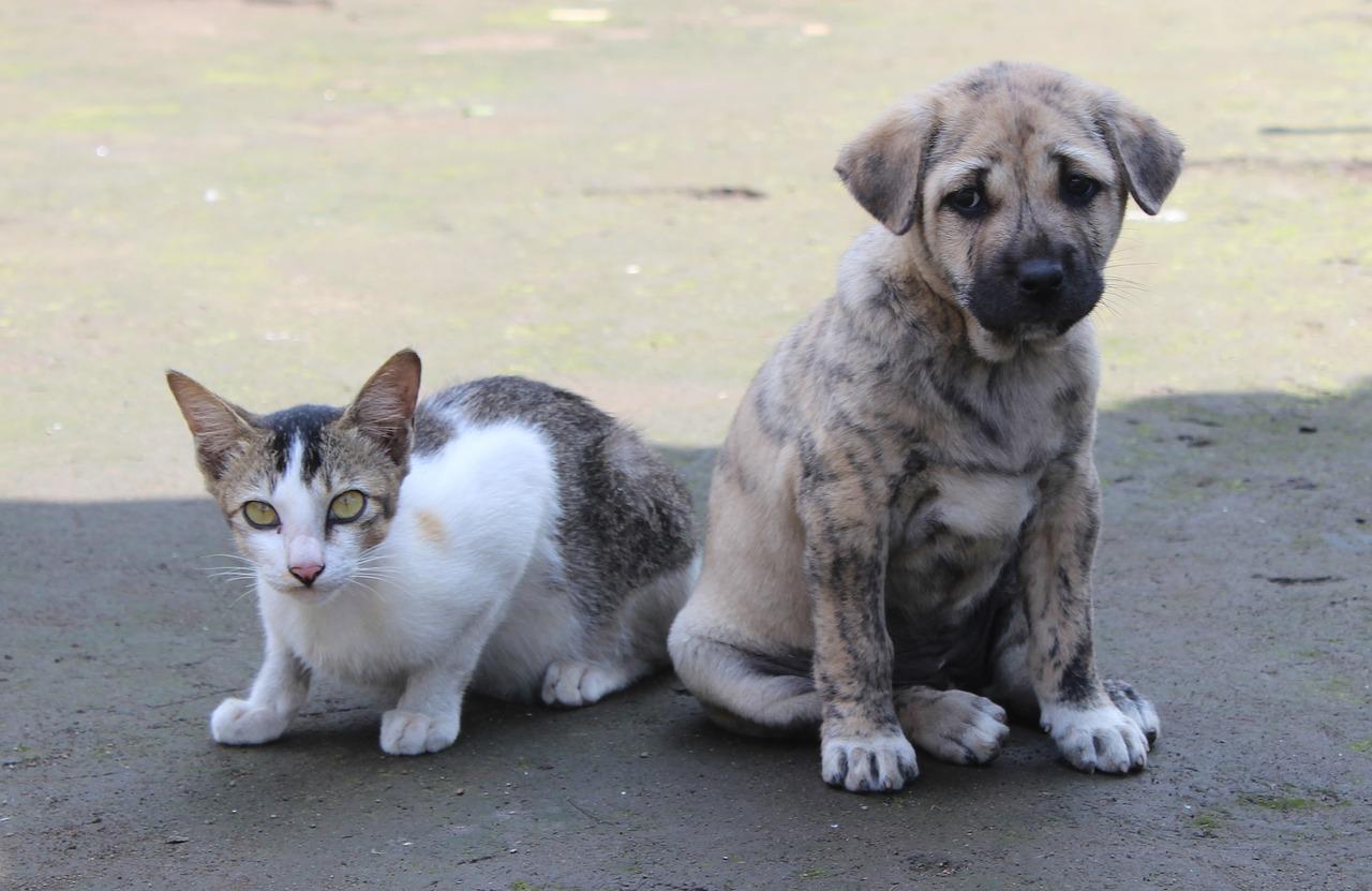 Katter och hundar
