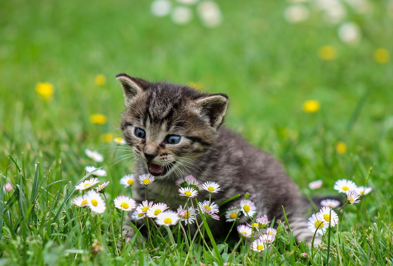 aktiv katt