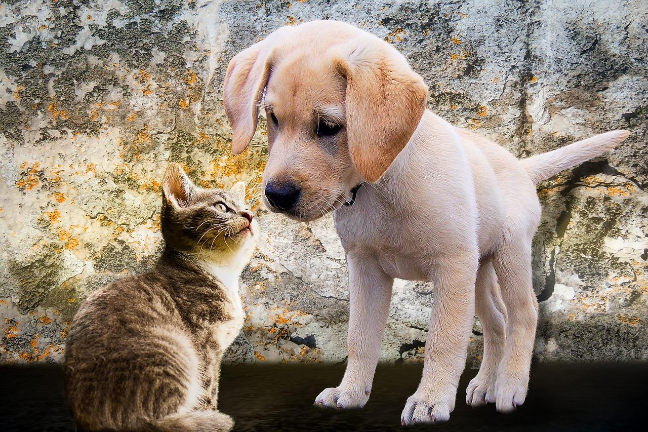 kan katt och hund leva tillsammans